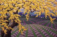 lavender-view-soe-soe-vart-space-ef-bc-8c-e9-a6-aclaxi-e4-ba-9e-ef-bc-8c-fang-e9-96-93-4204.jpg