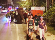 After Long Night's Walk to Freedom, Two Rescued Asian Elephants Reach Refuge at Samui Elephant Haven