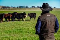 farmers-market-cattle-plus-farmer.jpg